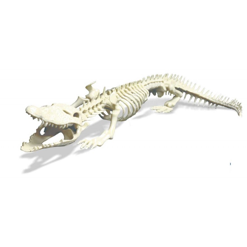 Skelet-crocodile